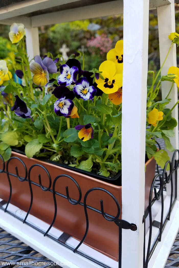 Plant beautiful violas in your updated hanging flower pot. Just a little paint and it's beautiful.
