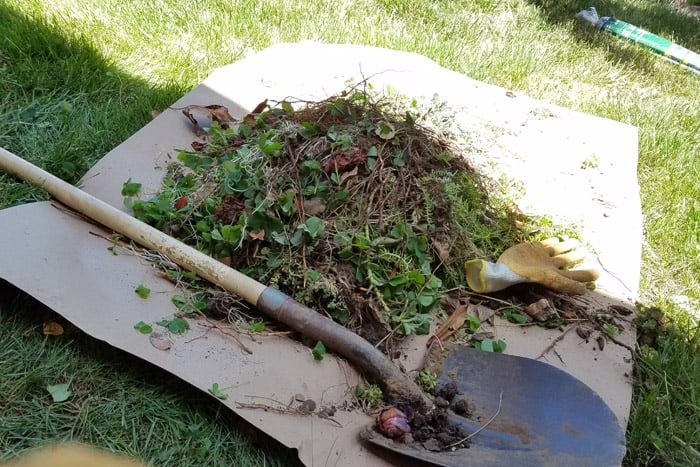 Shovel and weeds and plants from flower bed on cardboard.