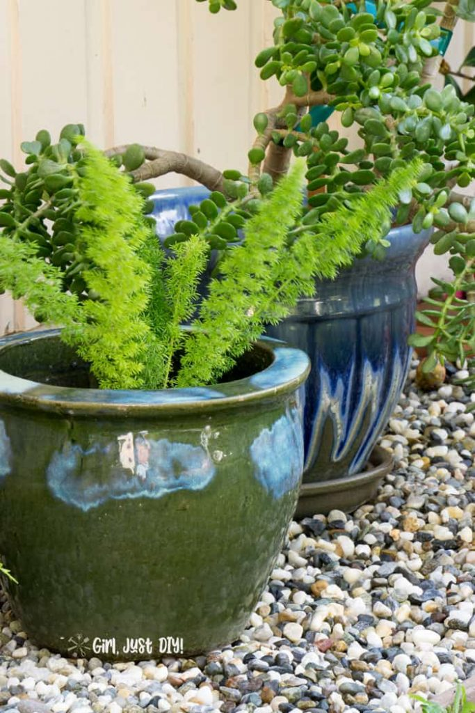 Fox tail fern and jade in pots on rock flower bed.-1