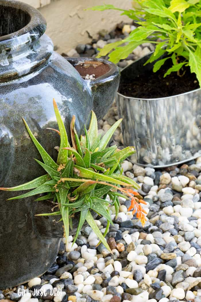 Strawberry pot with succulent on rock flower bed.