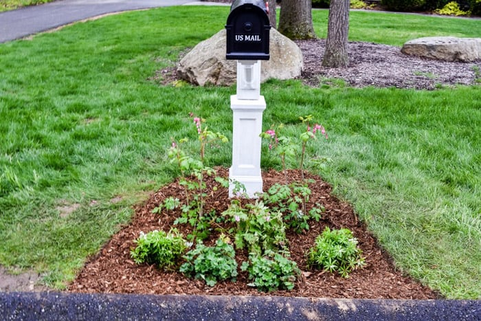 Garden bed with plants under black mailbox on white post.