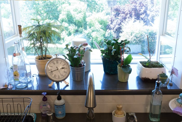 Kitchen window filled with flower pots, bottles and a clock.